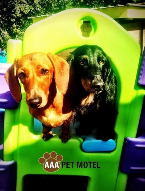 AAA Pet Motel - Yarra Valley Accommodation