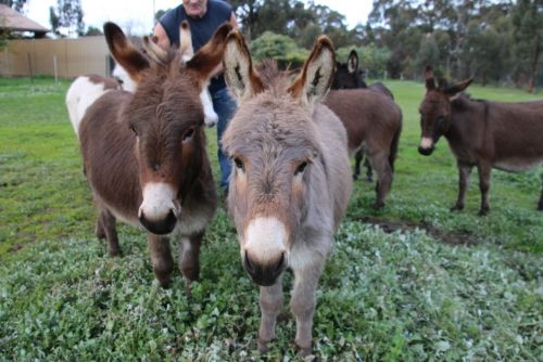 Donkey Tales Farm Cottages - Yarra Valley Accommodation