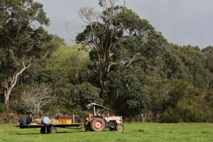 Boronia Farm - Yarra Valley Accommodation