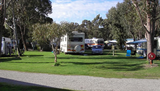 Pinjarra Caravan Park - Yarra Valley Accommodation