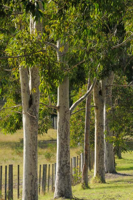 Stringybark Cottages - Yarra Valley Accommodation