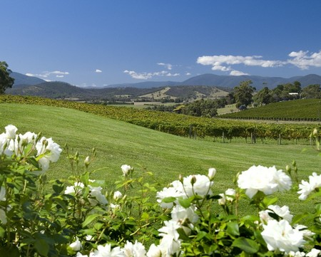 Balgownie Estate Vineyard Resort and Spa - Yarra Valley Accommodation
