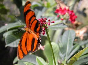 Butterfly Farm - Yarra Valley Accommodation