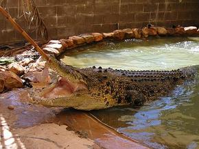 Wyndham Zoological Gardens and Crocodile Park - Yarra Valley Accommodation