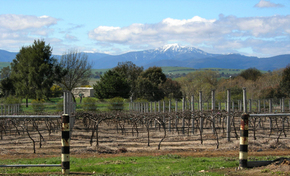 Buller View Wines - Yarra Valley Accommodation