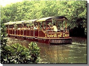 Daintree Rainforest River Trains - Yarra Valley Accommodation