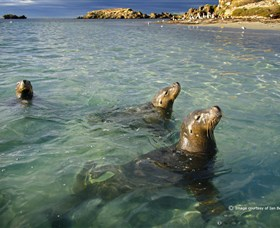 Shoalwater Islands Marine Park - Yarra Valley Accommodation