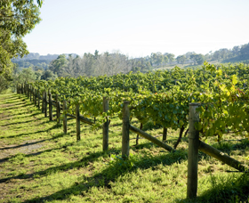 Surveyor's Hill Vineyards - Yarra Valley Accommodation