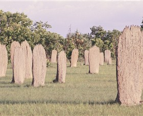 Magnetic Termite Mounds - Yarra Valley Accommodation