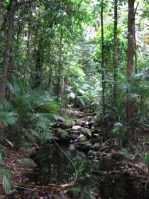 Mossman Gorge Rainforest Circuit Track Daintree National Park - Yarra Valley Accommodation