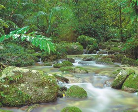 Mossman Gorge Daintree National Park - Yarra Valley Accommodation