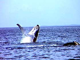 Whale Watching - Yarra Valley Accommodation