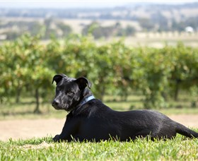 Moothi Estate Vineyard and Cellar Door - Yarra Valley Accommodation