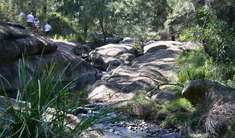Towarri National Park - Yarra Valley Accommodation