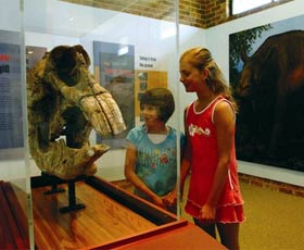 Australian Museum Diprotodon Exhibition - Yarra Valley Accommodation