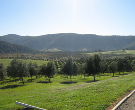 Hastings Valley Olives - Yarra Valley Accommodation