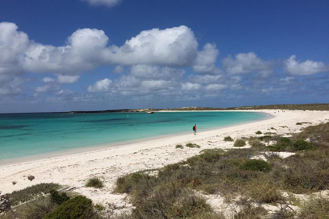 Abrolhos Island Half Day Fly and Flipper