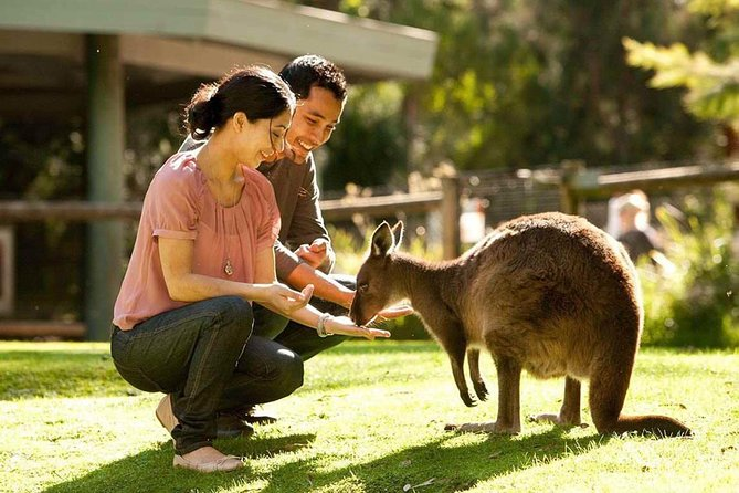 Very Best of Perth Tour - Wildlife Park  City Highlights Tour - Yarra Valley Accommodation
