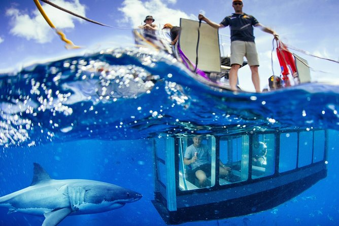 White Shark Tour with Optional Cage Dive from Port Lincoln