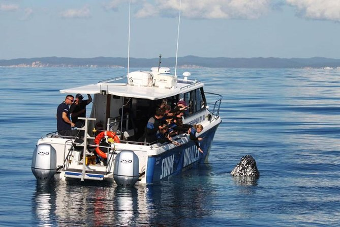 Hervey Bay Whale Swim and Watch