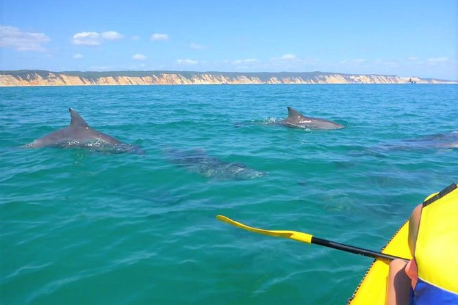 Half-Day Kayak with Dolphins and 4WD Beach Drive from Rainbow Beach - Yarra Valley Accommodation
