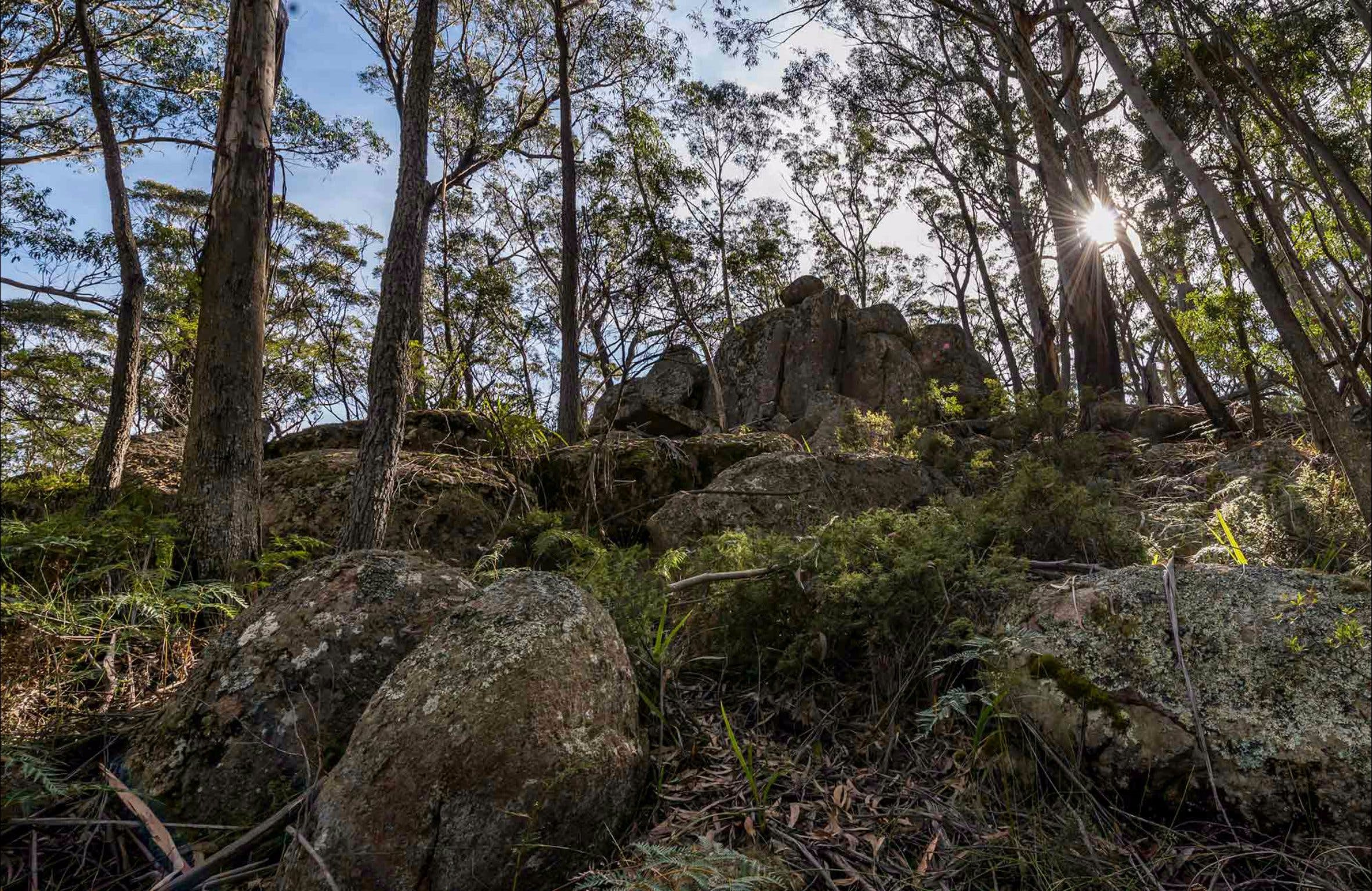 Pheasants Peak Walking Track - Yarra Valley Accommodation