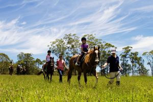 Port Macquarie Horse Riding Centre - Yarra Valley Accommodation