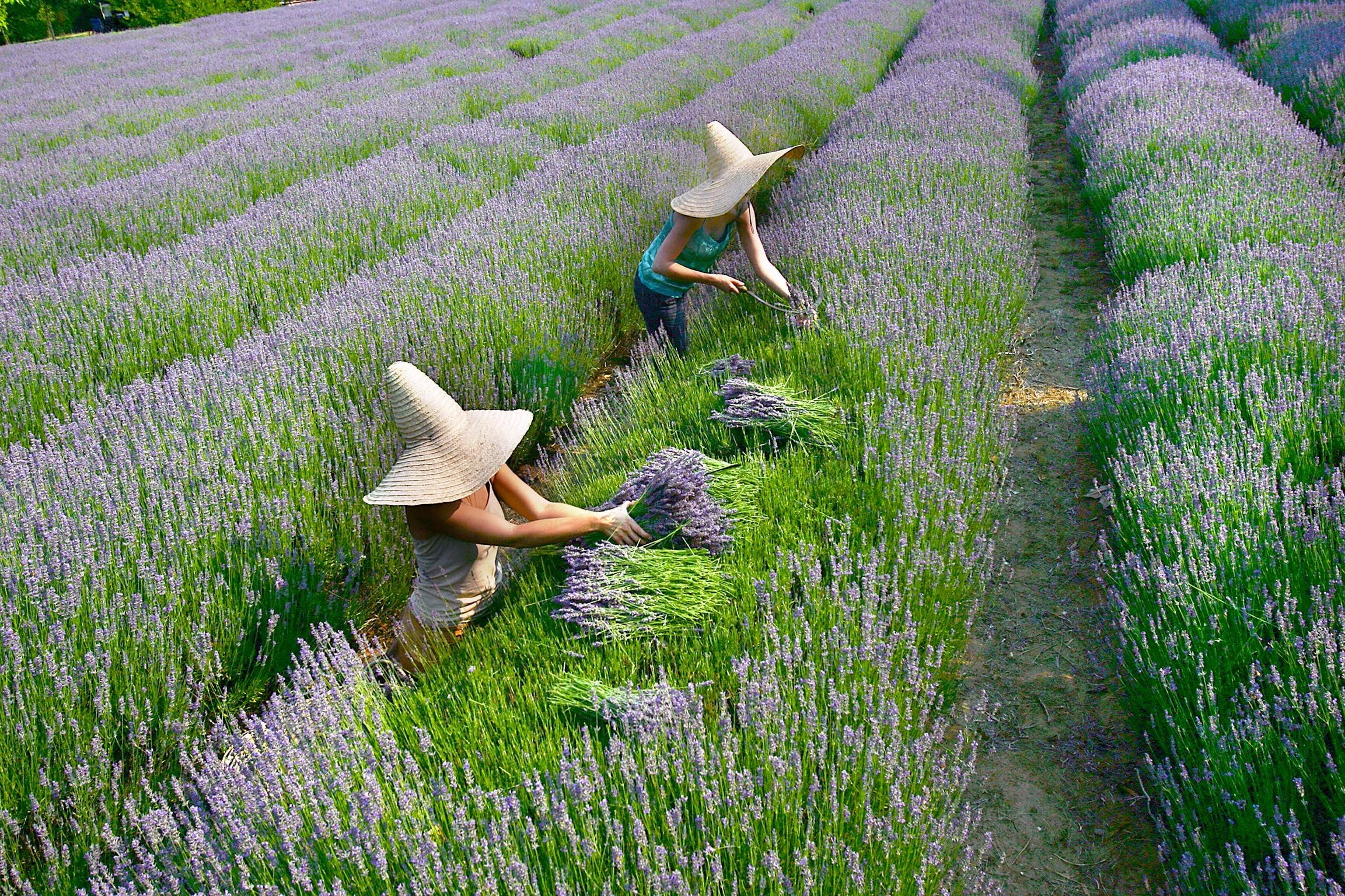 Lavandula Swiss Italian Farm - Yarra Valley Accommodation