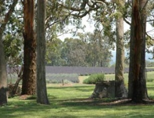 Aloomba Lavender - Yarra Valley Accommodation