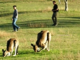 Araucaria Ecotours - Yarra Valley Accommodation