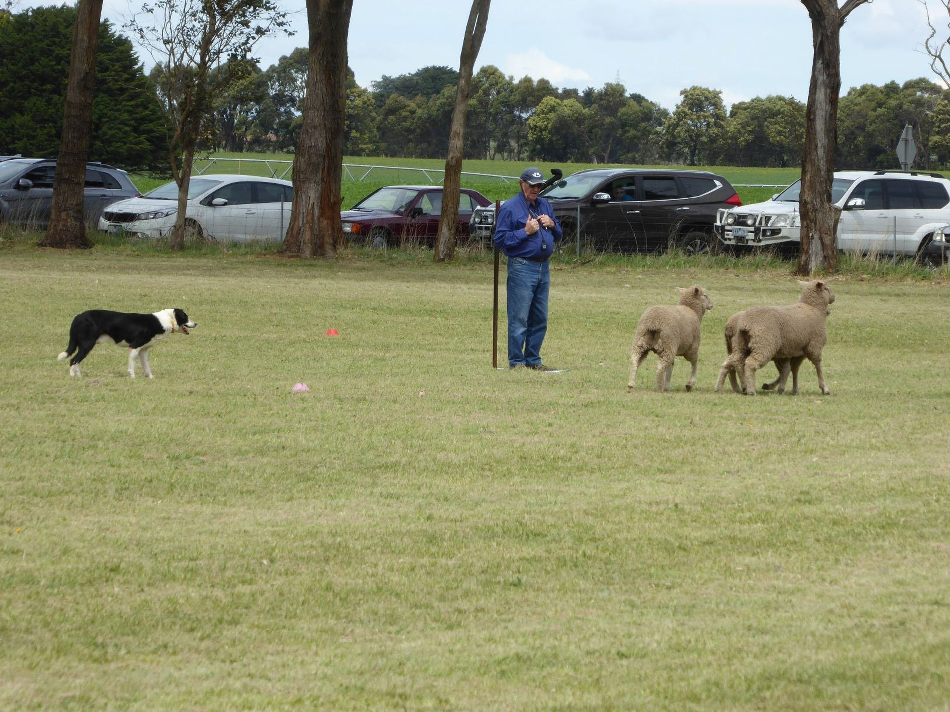 Dean Sheepdog Trials - Old Sniff Classic - Yarra Valley Accommodation