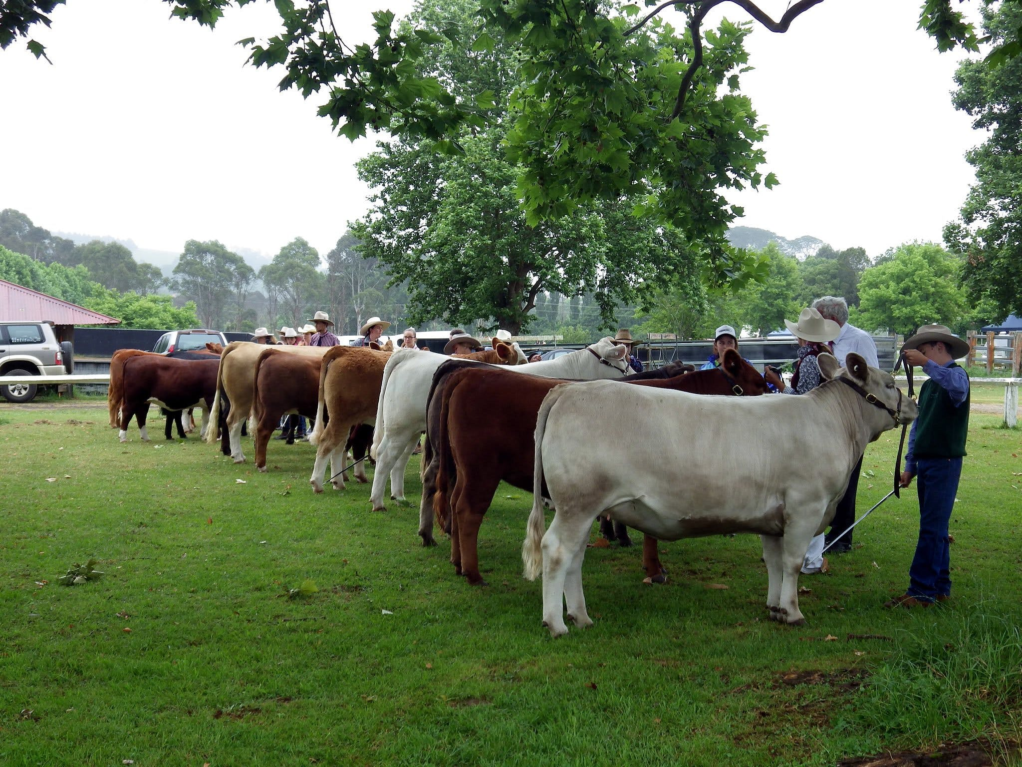 Dorrigo Agricultural Show - Yarra Valley Accommodation