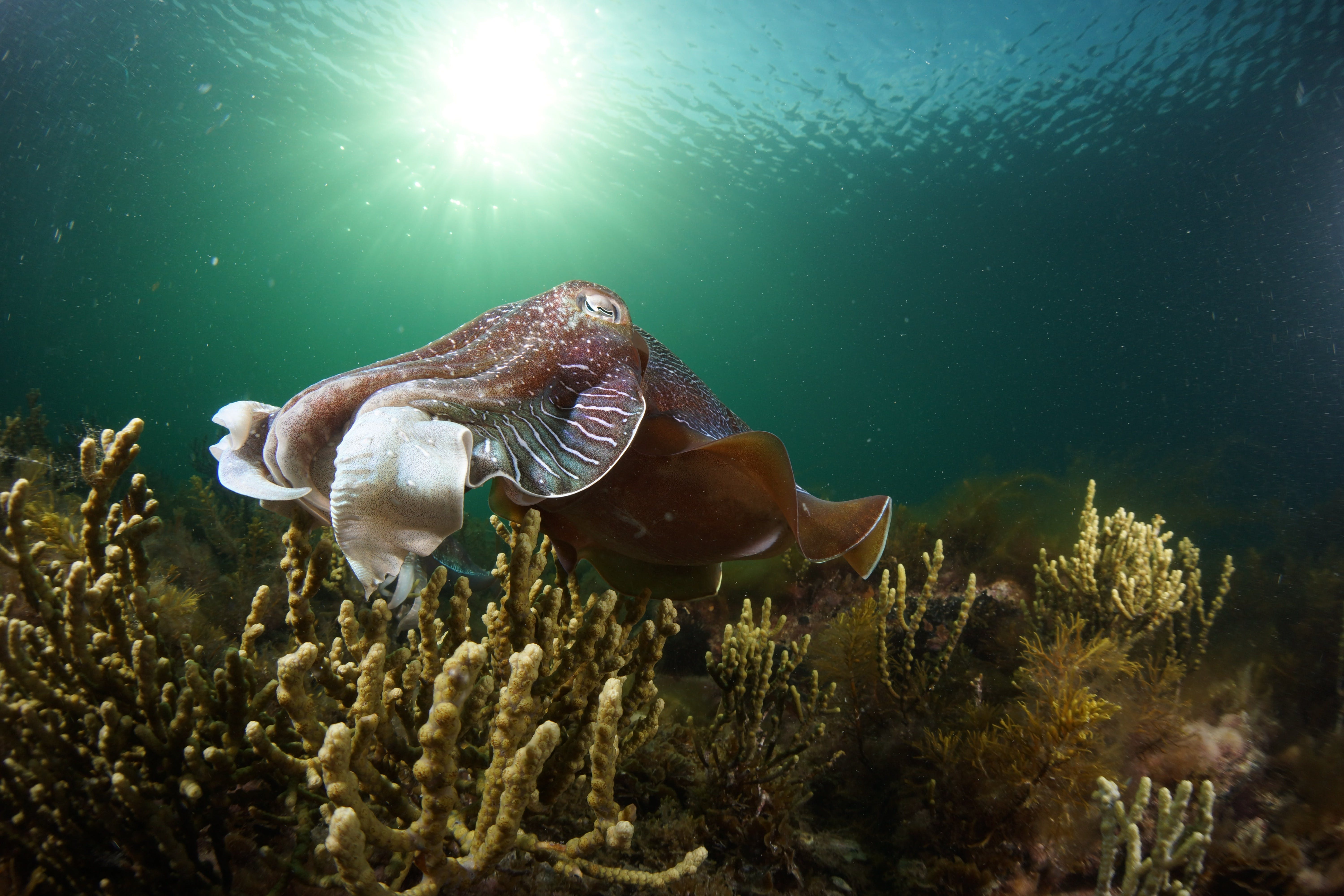 Cuttlefish Diving  Snorkeling EVERYDAY May -August - Yarra Valley Accommodation
