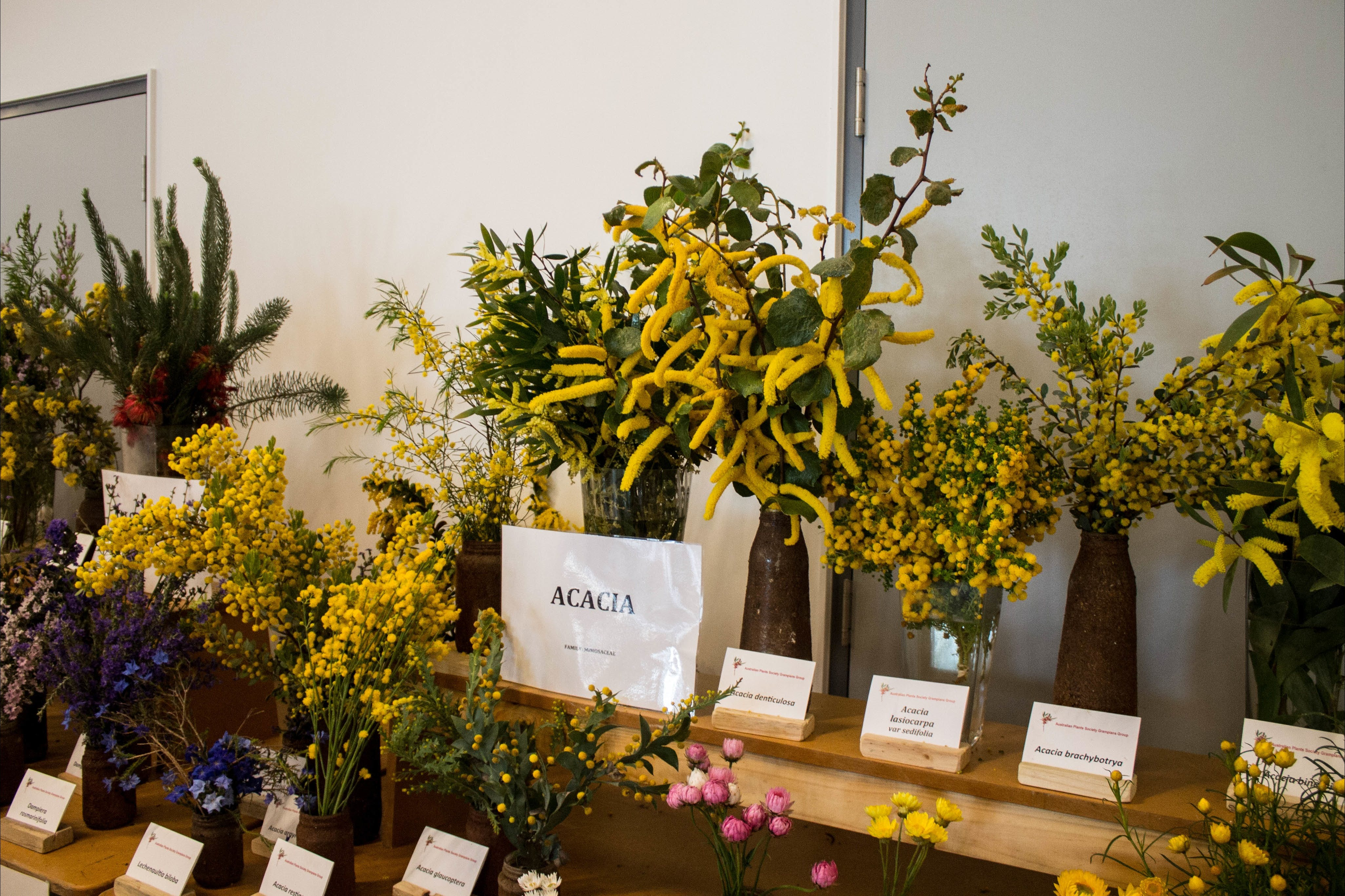 Pomonal Native Flower Show - Yarra Valley Accommodation